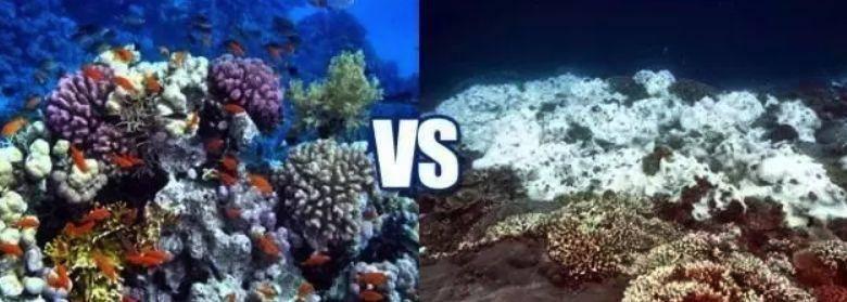 """大堡礁真的要""""消失""""了!珊瑚死亡速度加快,或无法恢复!有机会赶快去看看吧,要不然就再也见不到了..."""