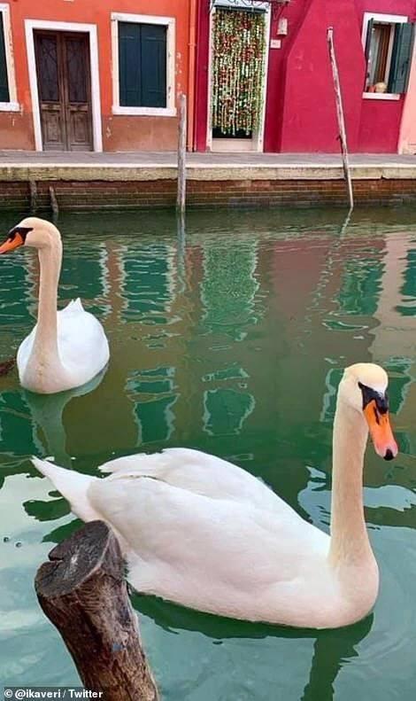 人类隔离才几天,河水清了,空气好了,连动物都回来了。网友:这大概是疫情唯一的好处吧?!